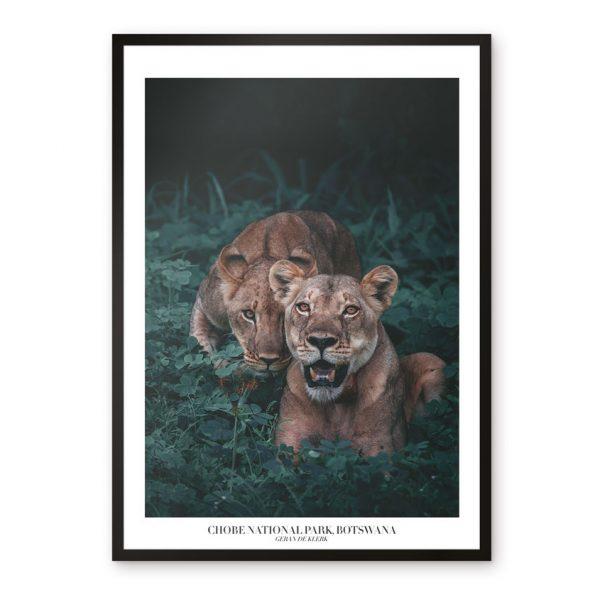 fotokonst tavlor safari