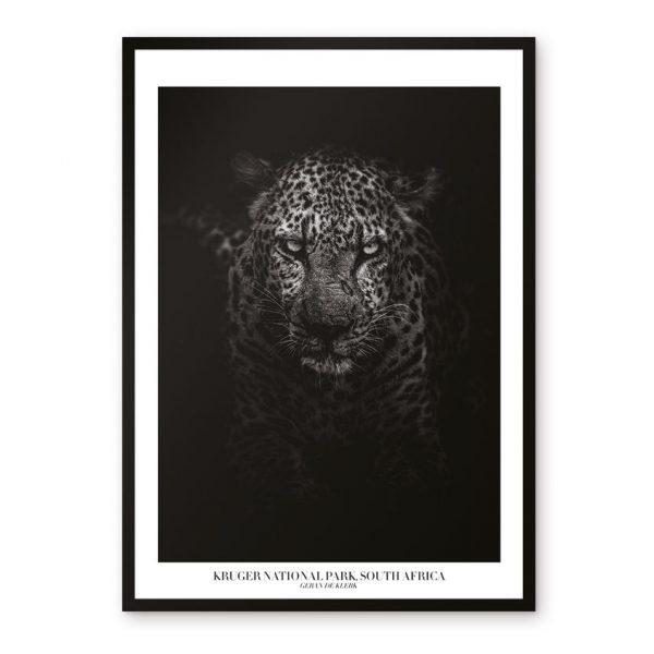 tavlor djur safari